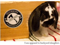 Bunnies opposed to backyard slaughter